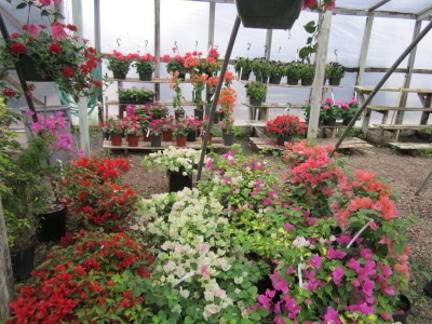 bed1 - Corpus Christi Landscaping Company - Turner's Gardenland
