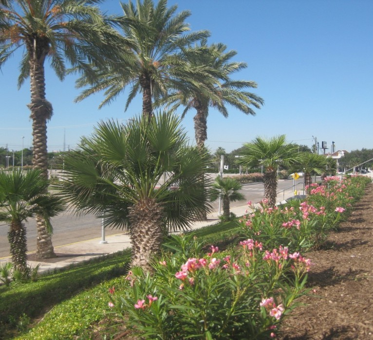 Designing landscapes should come natural to a landscaper. Turner's  Gardenland has the best landscaping design team in the Corpus Christi area. - Corpus Christi Landscaping Design – Turner's Gardenland